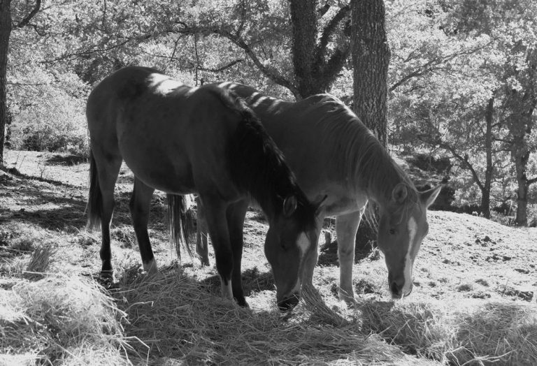 among-horses-2_son-canciones