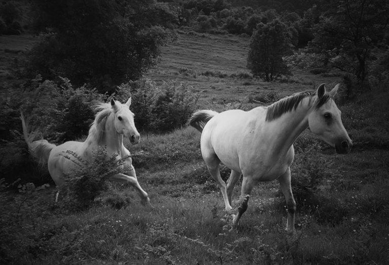 among-horses-mas_son-canciones