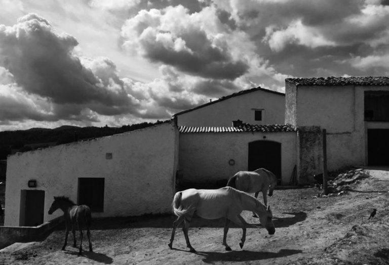 among horses